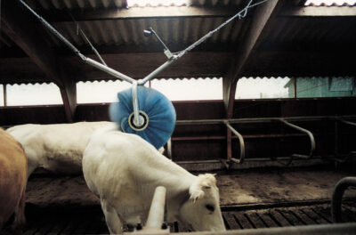 Rotating cattle brush1