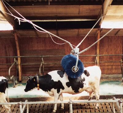 Rotating cattle brush2