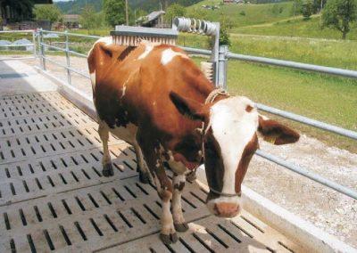 Brosse à bétail